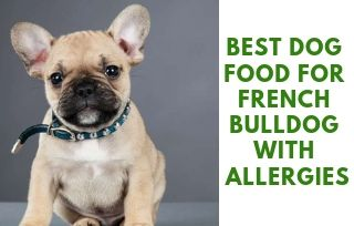 Allergic French Bulldog Food