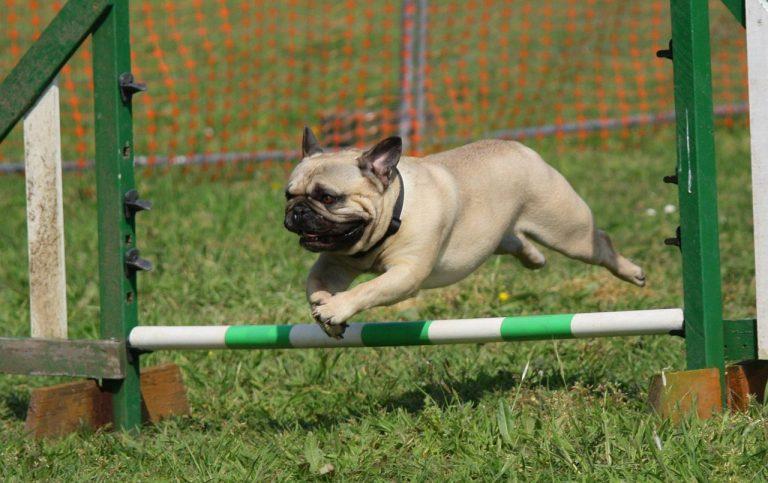 Best Dog training tips