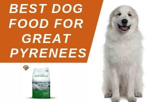 What are the best food for Great Pyrenees