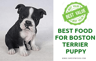 Boston Terrier Puppy Food
