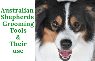 Australian Shepherds Grooming Tools