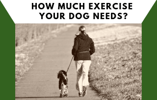 Dog exercise