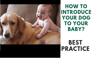 Introducting dog to your baby