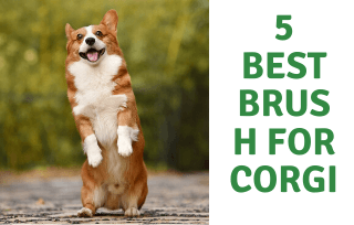Best Brush For Corgi