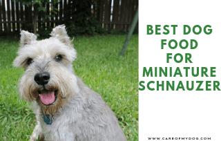 Best Food For Miniature Schnauzer