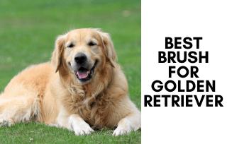 Best Brush For Golden Retriever Fur & Coat