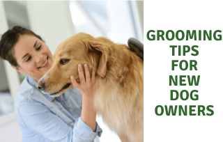 Grooming Tips for New Dog Owners