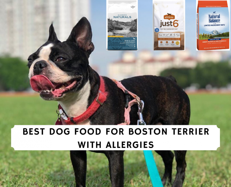 Best Dog Food for Boston Terrier with Allergies
